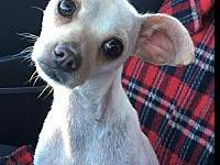 Chichi's story You can fill out an adoption application