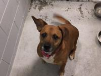 Chicky is an approximately 4 year old brown female