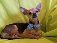 Chico's story HELLO POTENTIAL ADOPTERS, PLEASE READ