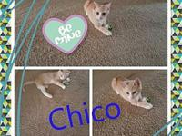Chico Fruit's story All of our kittens are in various