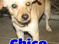 Chico's story 'Hello there. My name is Chico and I'm a