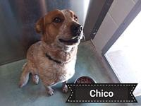 Chico's story This affectionate and handsome guy we