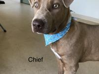 Hi! I'm Chief! I was a lost stray. I'm probably about