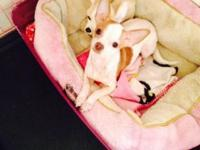 I have one male & & female chihuahua offered. The