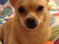 Hi! My name is Daisy. I am a tan chihuahua, and I am 1