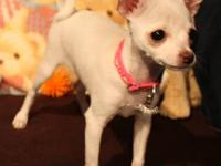 """China"" was born 05/02/2011. She is white with fawn"