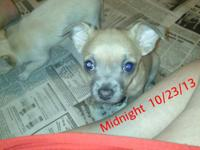 We have an adoreable 9 week old male who is looking for