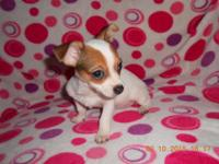 I have three Chihuahua puppies available. One female