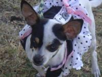 Chihuahua - Bitsy - Small - Young - Female - Dog Bitsy