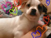 Adoption fee $145   Cuddley and snuggly warm soft