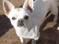 Chihuahua's story check out more information on our