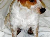 Chihuahua - Ellie Mae - Small - Adult - Female - Dog