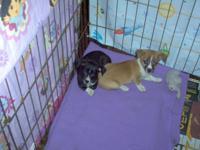 8 weeks old , 1 male , 1 female ( the black one ) ,