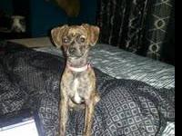 I have a 3 month old mix puppy. She is very cute and