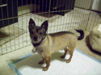 Chihuahua - Jose - Small - Adult - Male - Dog Update to
