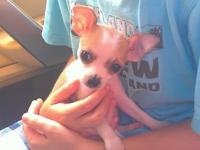 PENDING SALE This is my little Bubbles I raised from a