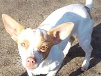chihuahua mix's story check out more information on our