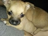 I have two female Chihuahua mixed puppies that need