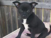 Orie is a fun loving little guy. Vary active and