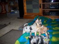 We have 2 litters of puppies. All puppies are $325.00.