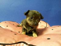 I have two Tiny Female Chihuahua puppies availble. They