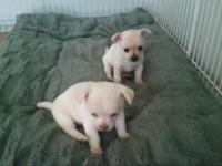 These 2 cuties will ready to go to their forever homes