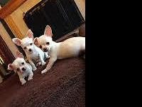 Born August 15, 2015 Boy - white Girl - cream Girl -