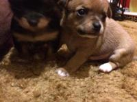 Two male and two female puppies looking for a loving