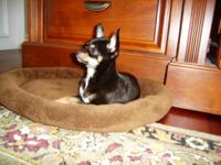 Description Female . All shots and kennel trained. A
