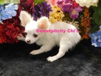 """Ani"" is VERY SMALL. She is a long coat white with very"