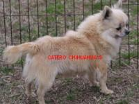 Patrick is offered as a pet. Super sweet boy. Looking