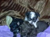 Nice pups 2.girl long coats .blue n white is dble