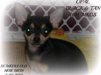Awesome Pedigree!! & AKC Registered!!SALEING AS A PET