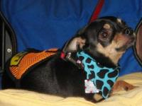 I have a male and female chihuahua they are a pair!