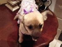 Last April I lost my beloved Chihuahua of 22 yrs. My