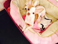 I have one male & & female chihuahua available. The