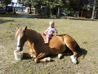 Charmy is an 11 year old, registered Foxtrotter mare.