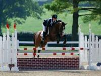 Jazz Me (Jazz) is a 14yr old, 16hh, Thoroughbred