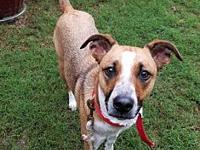Chili's story Chili was adopted from a SC shelter back