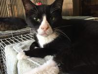 Chillbert is a ten year old tuxedo cat. He is thin and