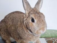 Chilli is a 4 year old neutered bunny.  His two