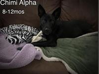 Chimi's story Please complete our application at: