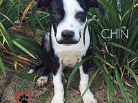 Chin - adoption pending's story If youre looking for a