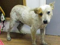 China's story 18-D08-030 China Breed: Heeler Mix Size: