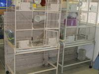 Reduced: 2 cages available.These are large 3 level