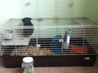 Chinchillas to good homes. My family has kept