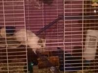 I have 12 chinchillas to rehome. Various ages and