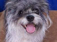 Chinese Crested Dog - Leia - Medium - Young - Female -