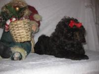 Tootsie has just been discounted 20% thru 12-15-12