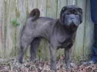 For sale is Bear. He was born Aug. 27, 2009. Bear is a